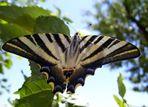 Mariposa...de colores vistosos...FERNANDO LÓPEZ   fOTOGRAFÍAS...