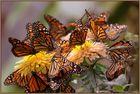 mariposas - little wings