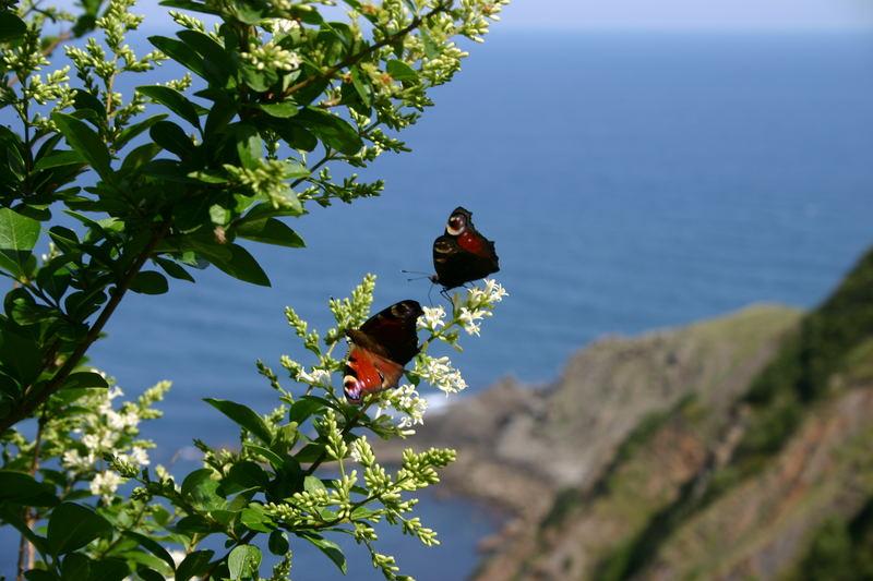 Mariposas mirando al Mar Cantabrico