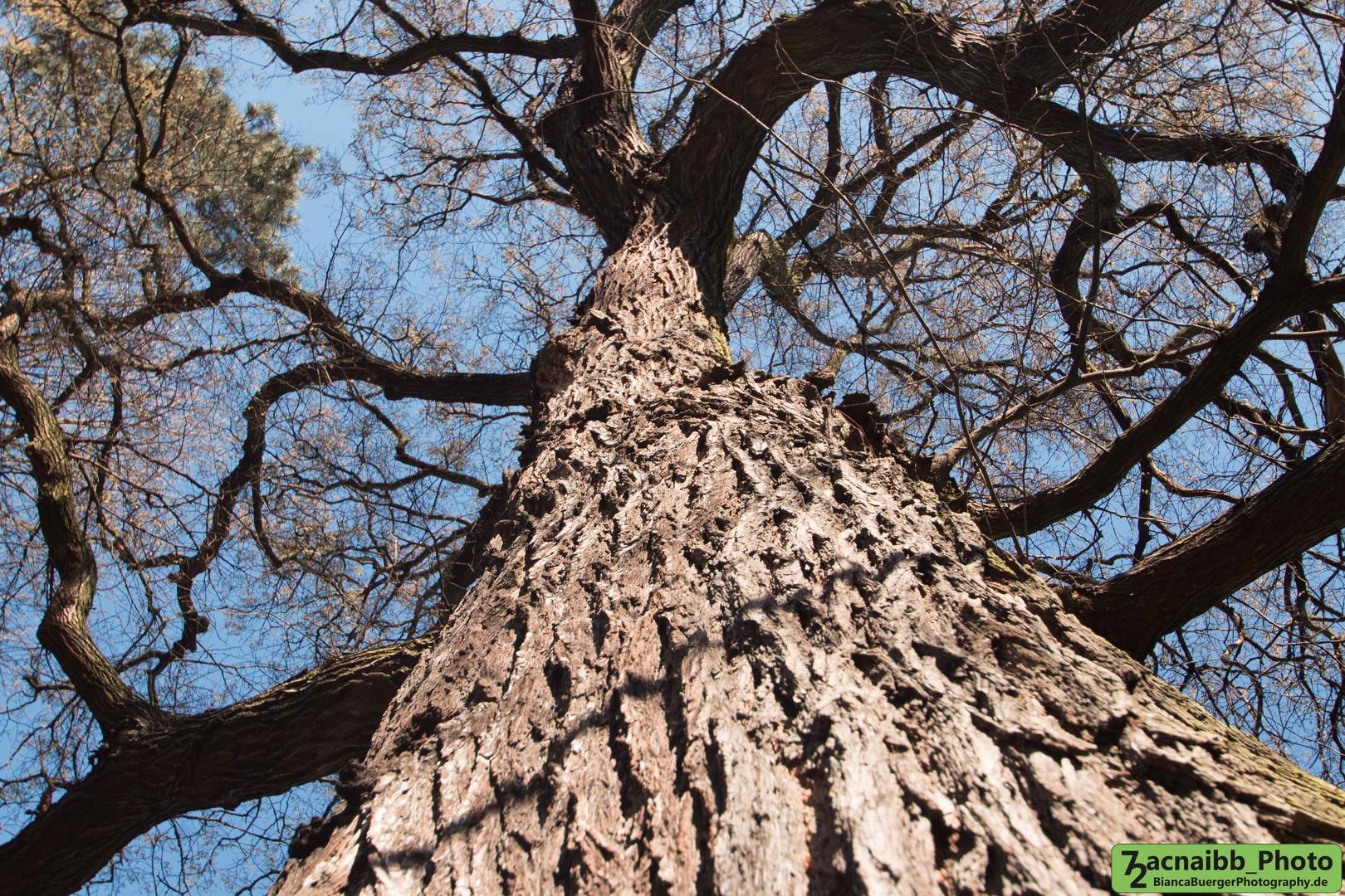 markanter Baum