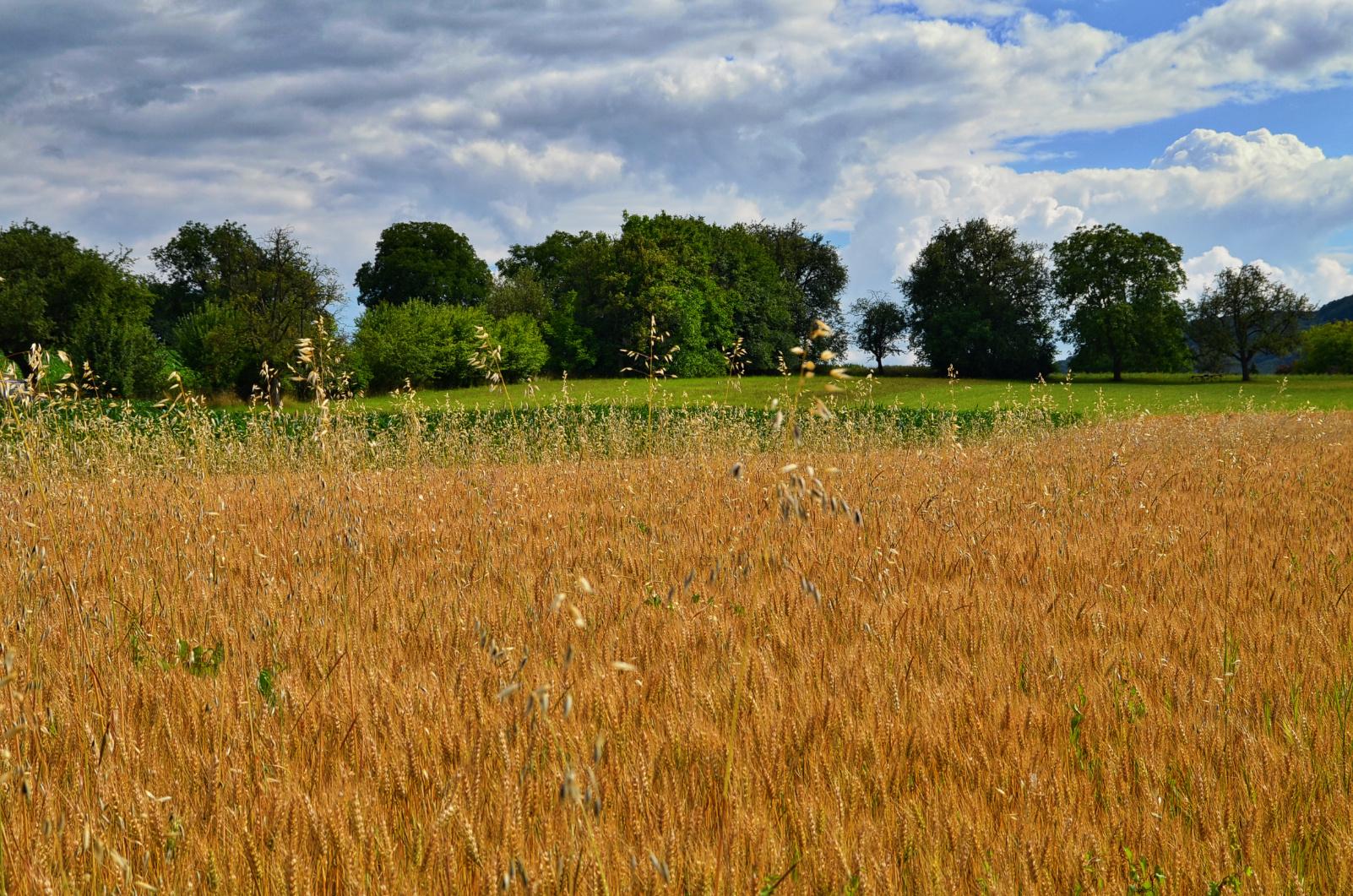 Markgräfler Felder und Wiesen