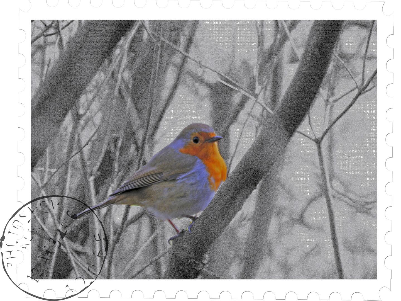 Markiger Vogel