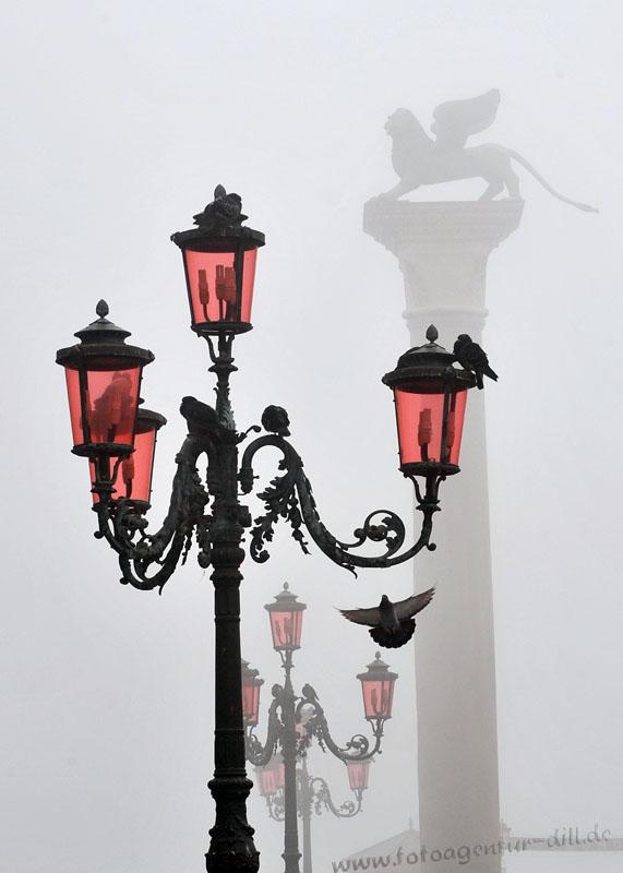 Markuslöwe im Nebel