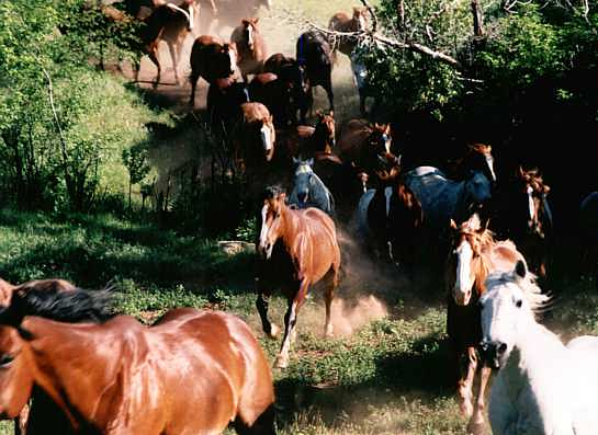 Marlboro Werbung? Nein! Schively Ranch, Montana