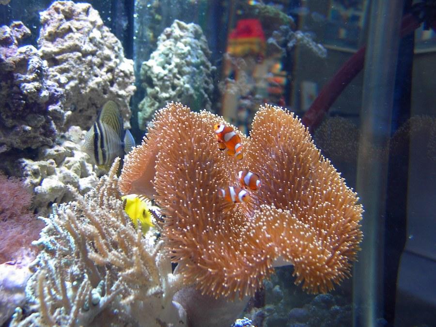 Marlin, Nemo und Co.