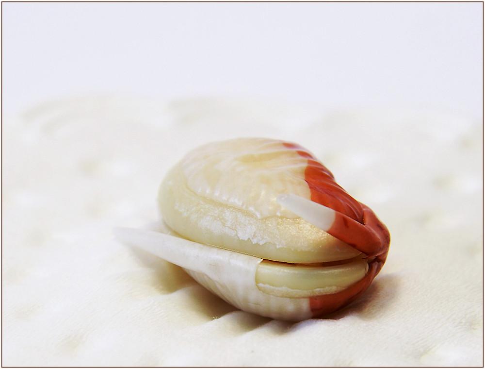 Marmorbohne