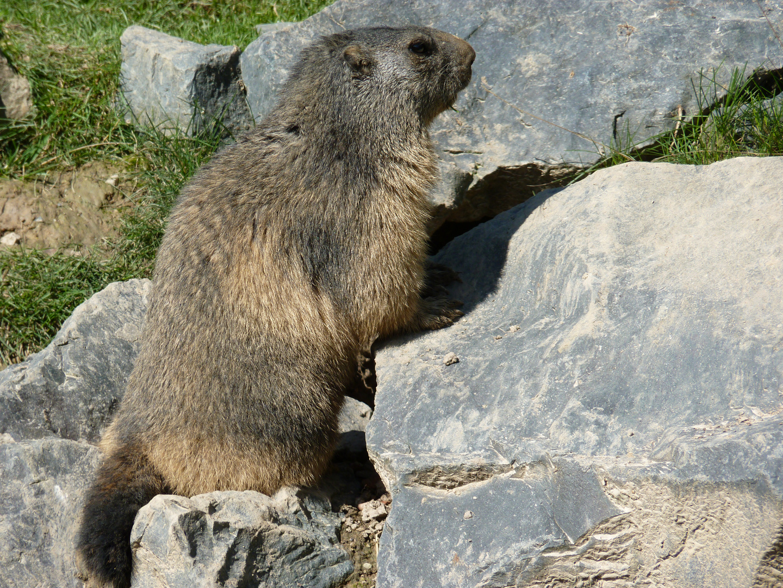 Marmotte 2.