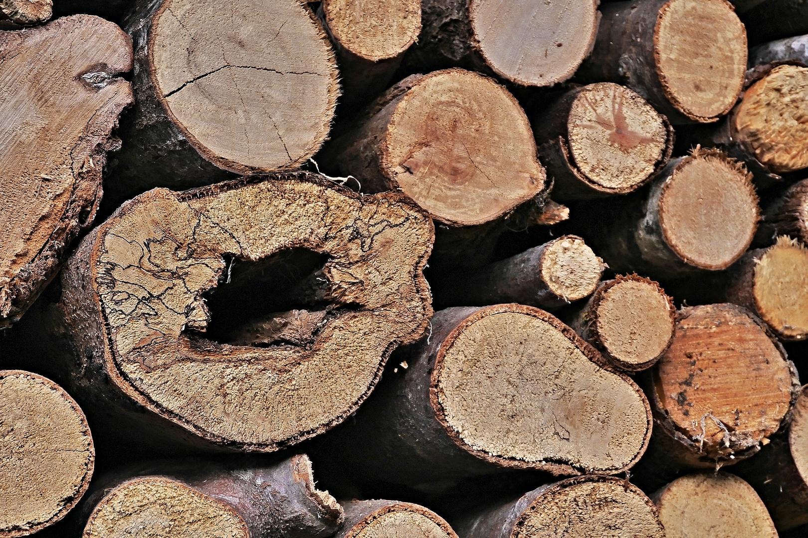 marodes Holz