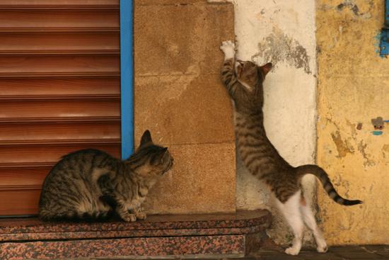 Marokkanisches Katzenleben