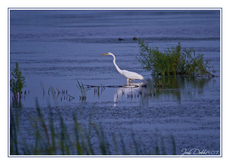 Marsh Hunting