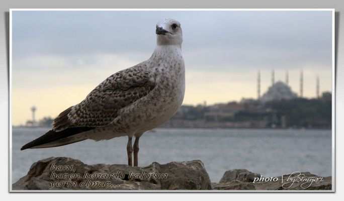 Marti and Istanbul