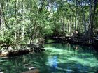 Martin pêcheur perdu dans la mangrove