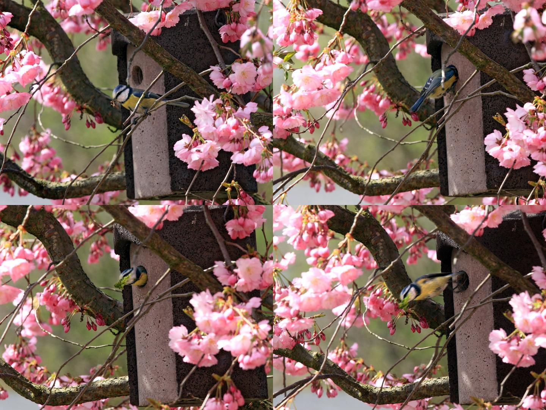 Martina's Garden II, Springtime