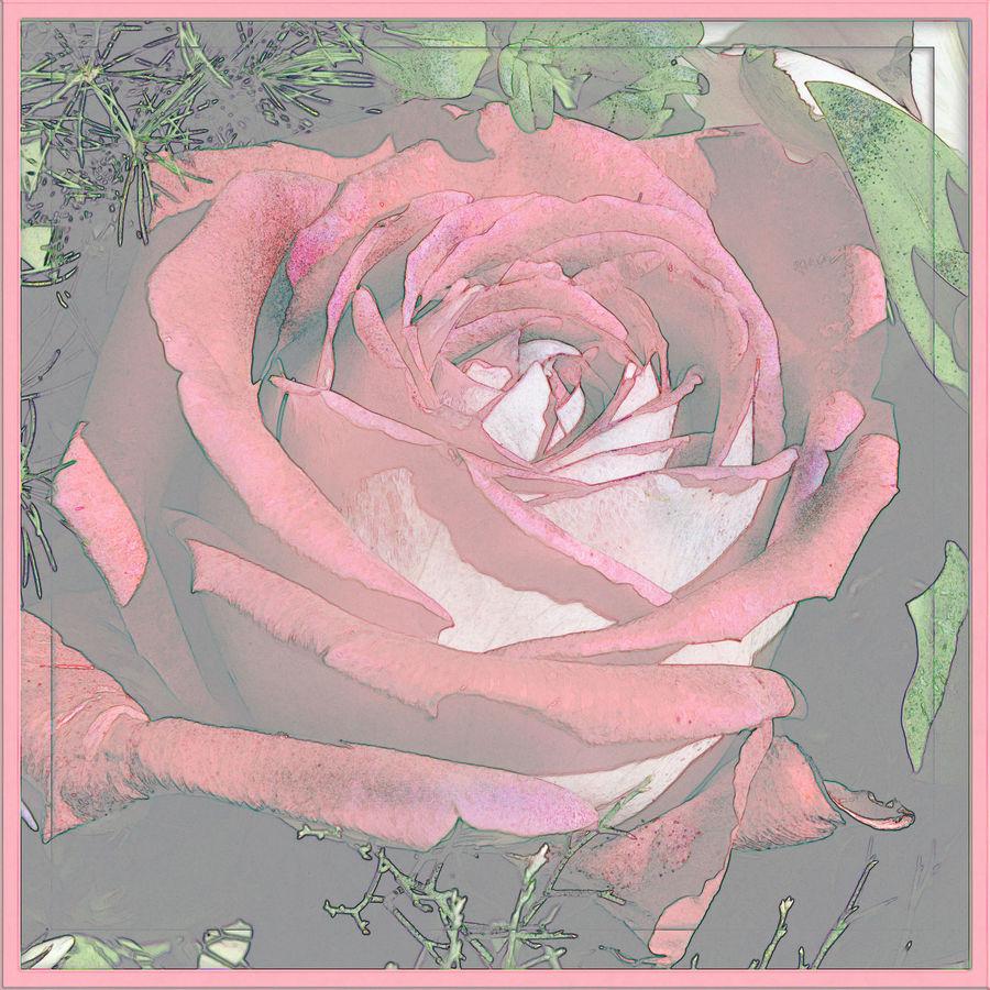 ~ marvelous marble rose ~