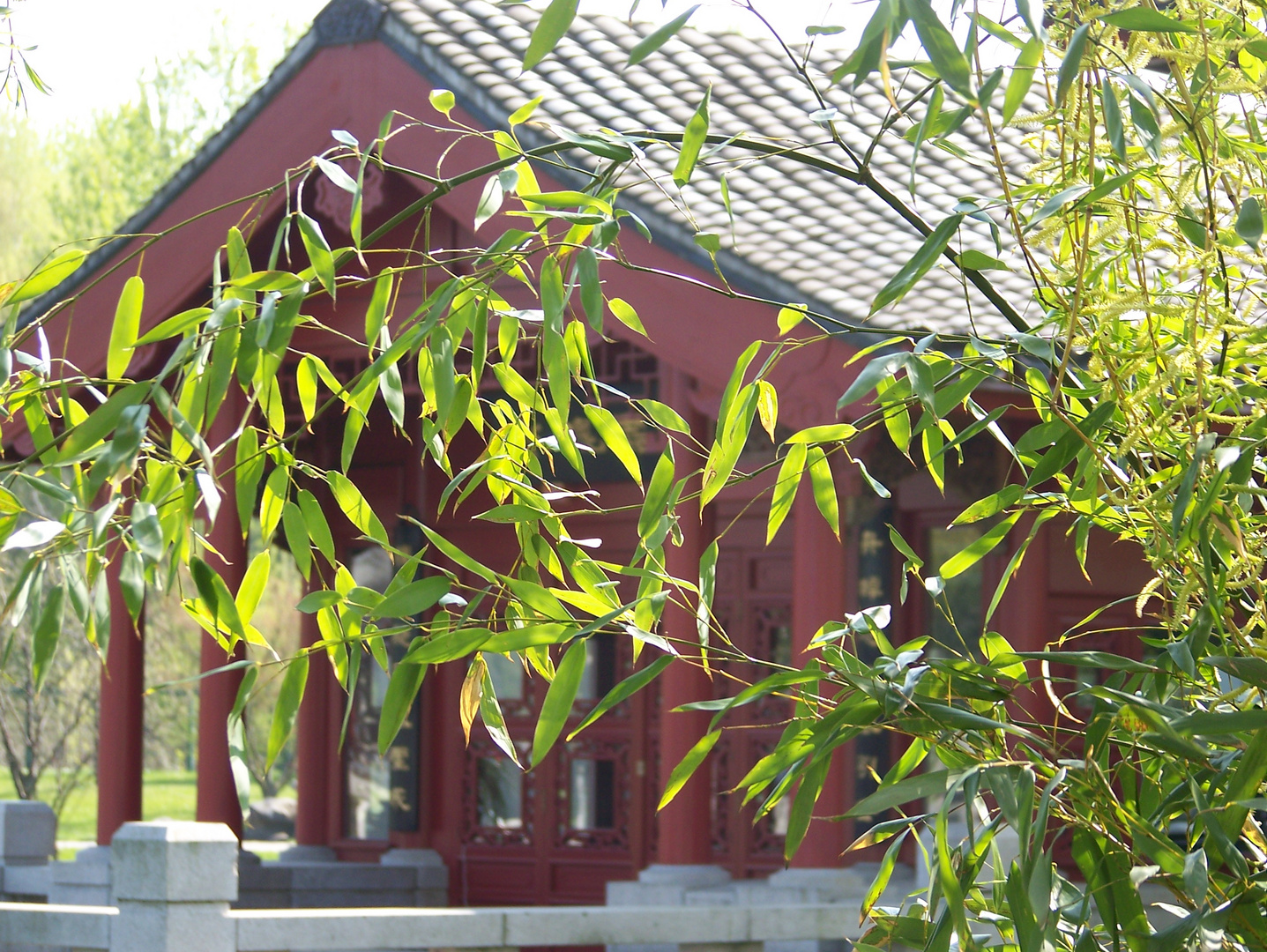 marzahner bambus