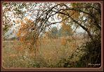 Más colores de otoño..
