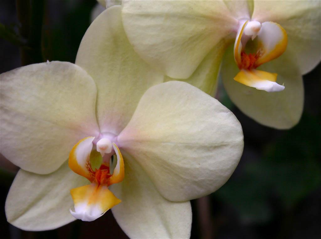 Más orquídeas