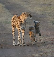 Masai Mara 2016 – Malaika mit Ihren Babys – Bild 3