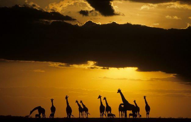 Masai Mara Game Reserve_Kenya_East-Afrika