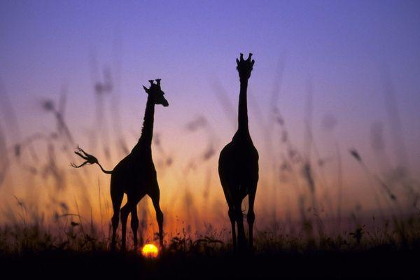 Masai Mara Game Reserve_Kenya_Ost-Afrika