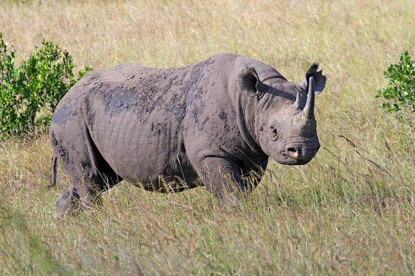 Masai Mara III