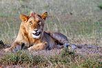 Masai Mara IV