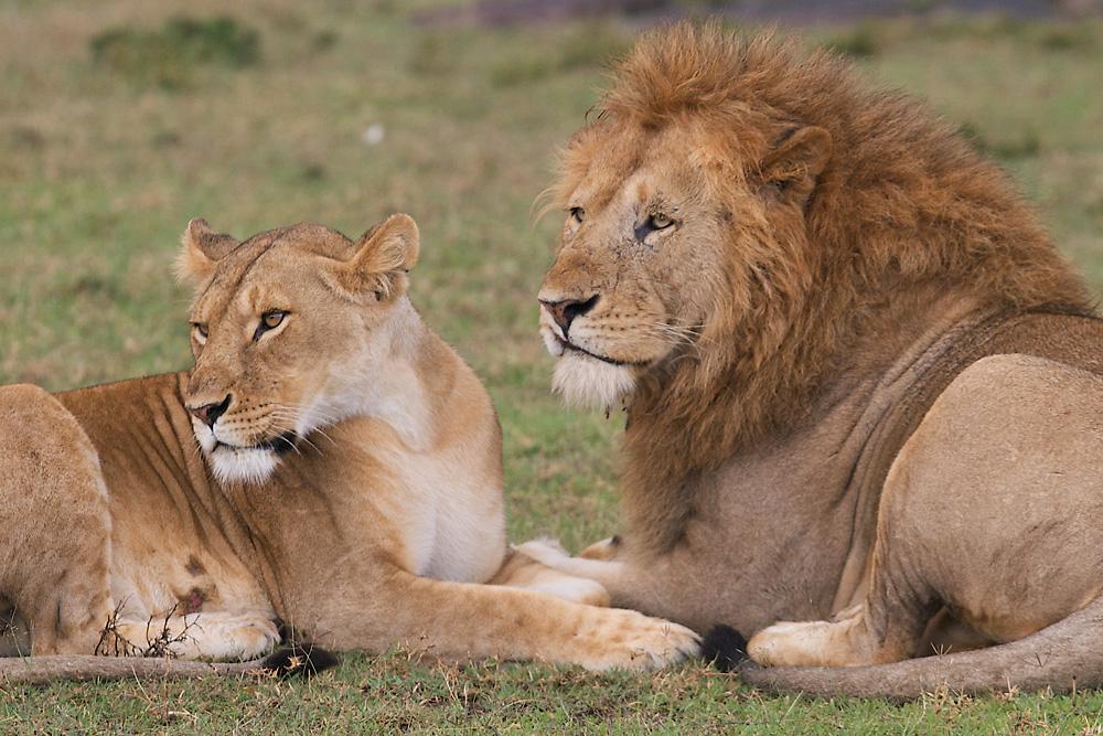 Masai Mara Kenya -10-