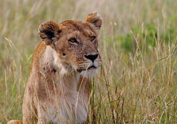 Masai Mara V