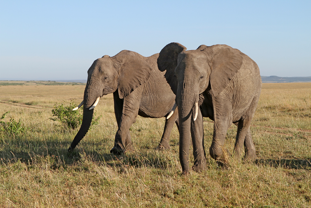Masai Mara VI