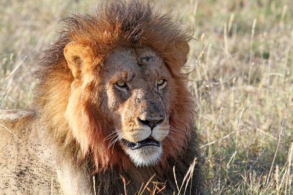 Masai Mara VII