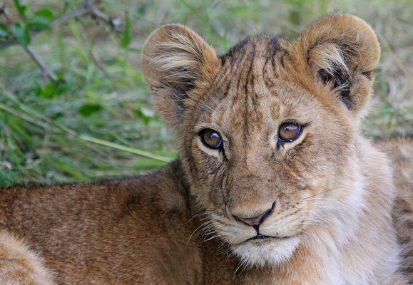 Masai Mara VIII