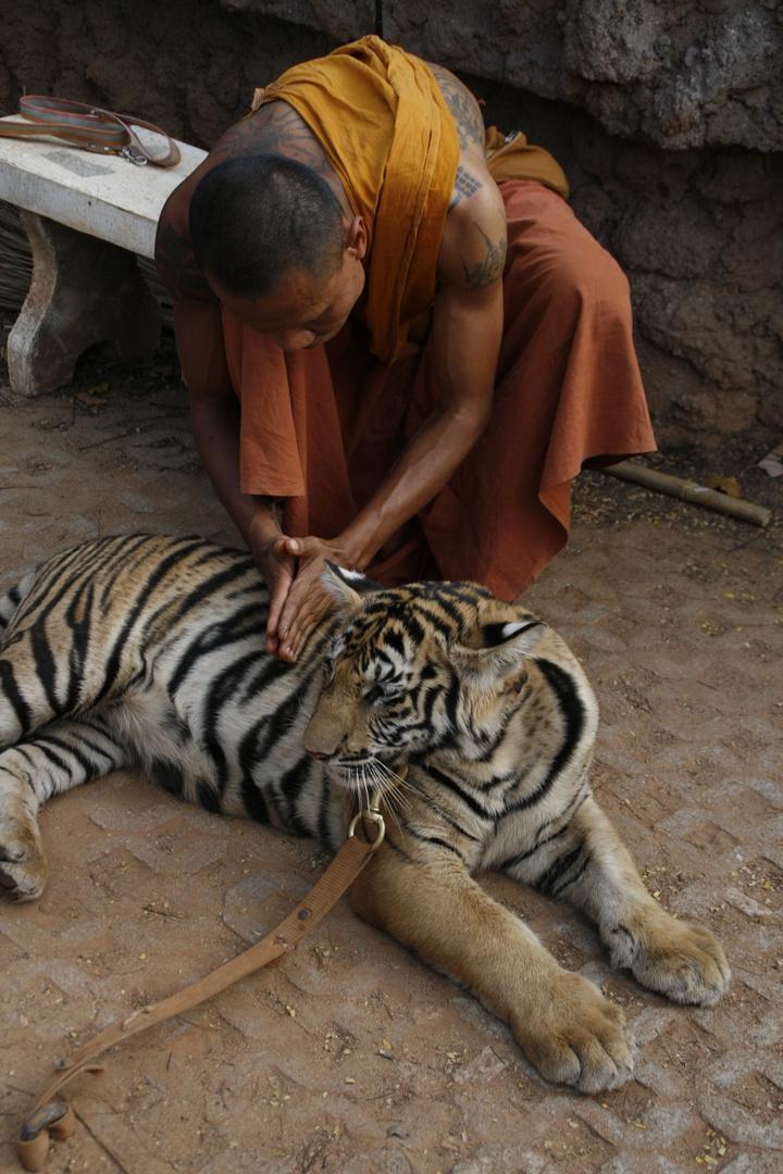 Masaje al tigre