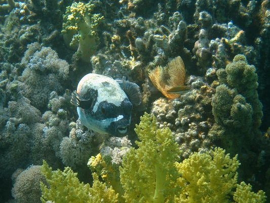 Maskenball im Roten Meer
