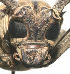 masque africain ?