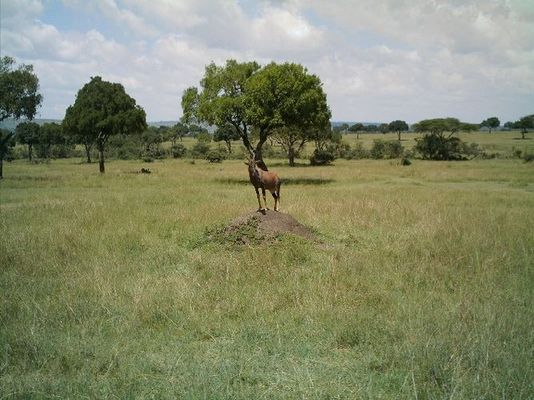 Massai Mara / Kenia