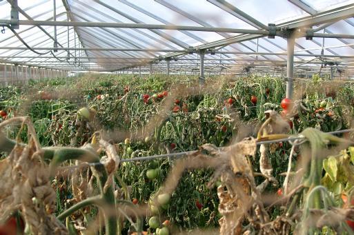 Massen-Pflanzen-Haltung