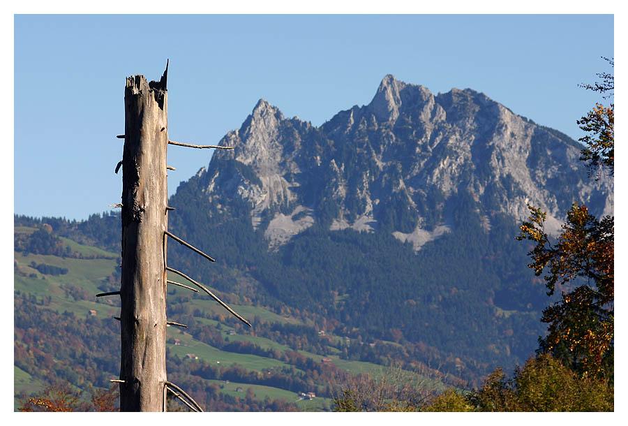 massiver Stamm == massiver Berg