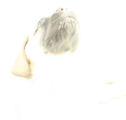 Mastif mal anders
