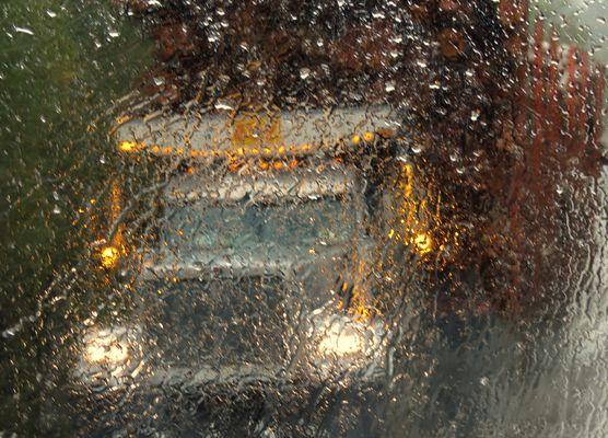 mastodonte américain sous la pluie