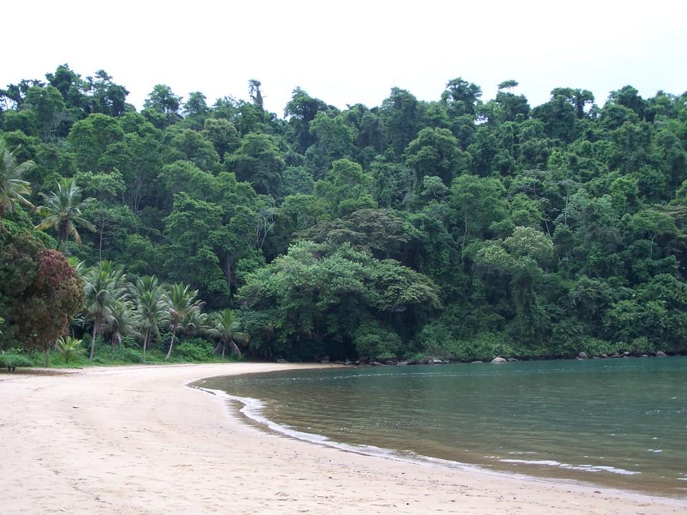 Mata Atlantica - Paraty Brazil