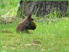 Material - Beschaffungs - Eichhörnchen