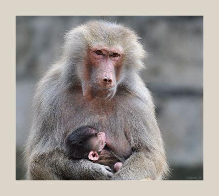 Maternal love ..