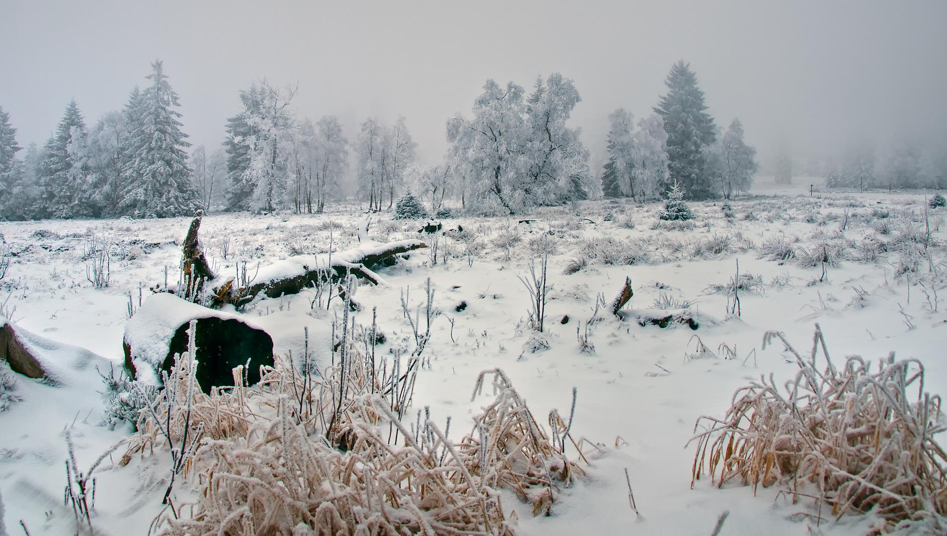 matin brûmeux II - Nebelmorgen II