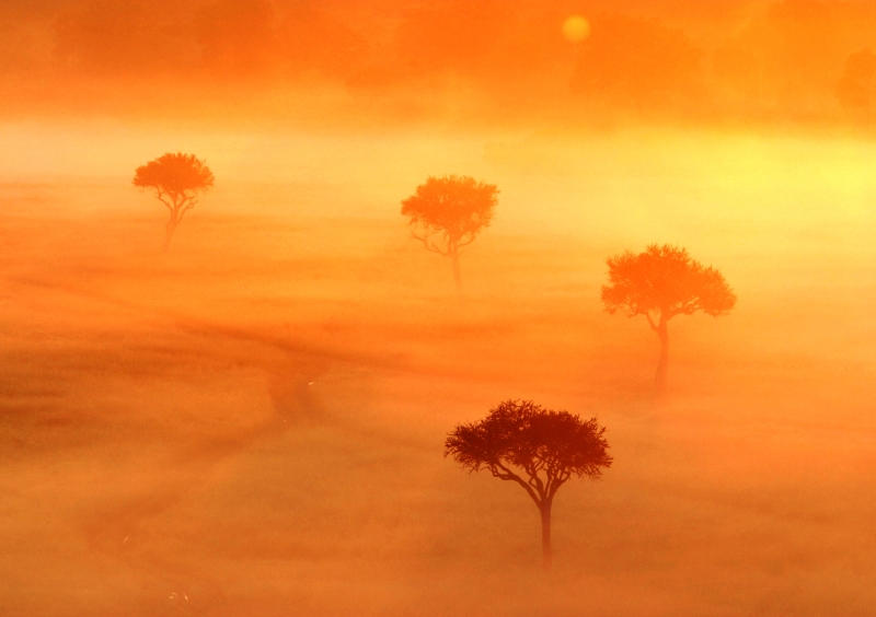 Matin en Safari-Montgolfière (Morning baloon Safari) - Masai Mara / Kenya - Brume au lever du soleil