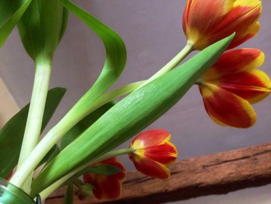 Matin fleuri