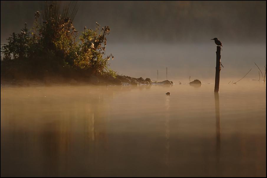 matin pêcheur.