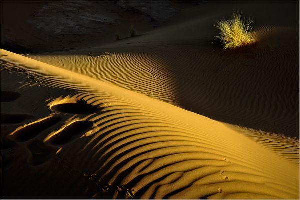 Matin sur la dune