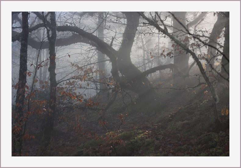 matinée brumeuse