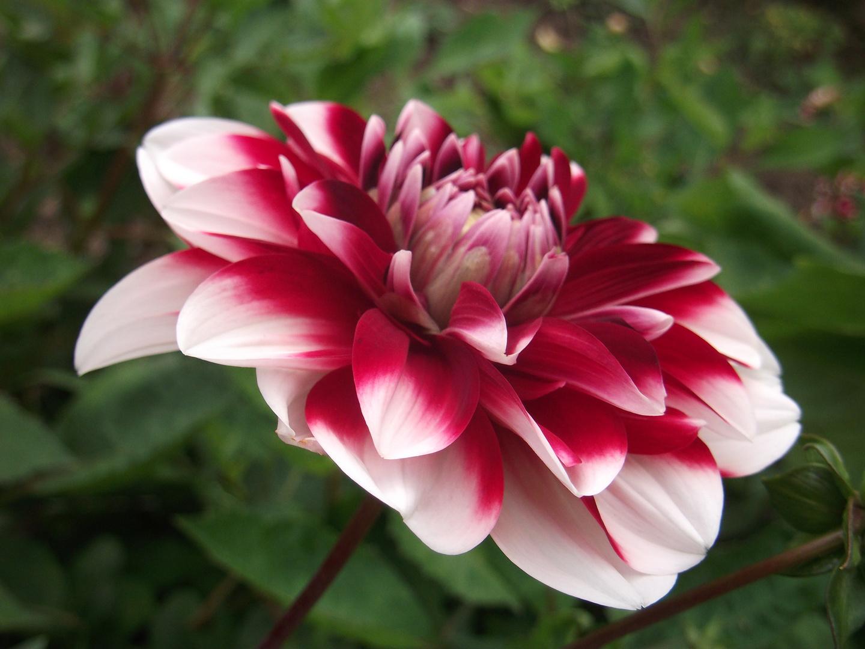 Mattiss-Blumen1