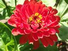 Mattiss-Blumen4